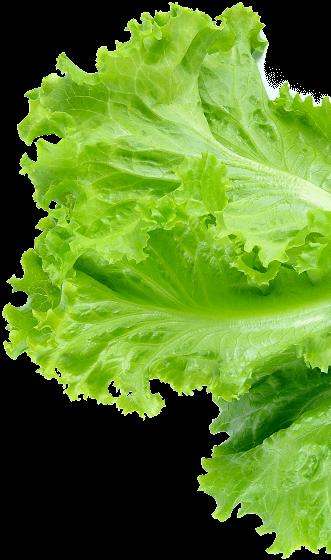 footer-lettuce